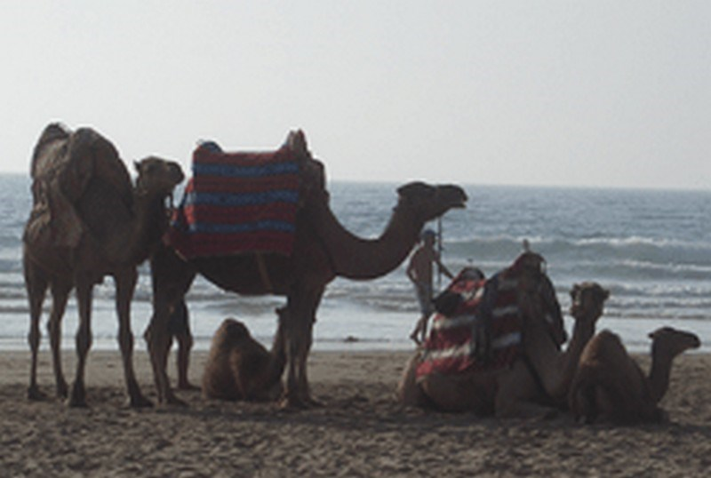 Travel to ASILAH45.jpg